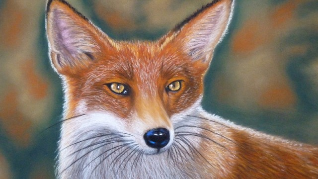 Fox 'On The Lookout'