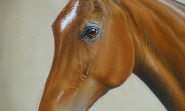 'Mancha' The Polo Pony