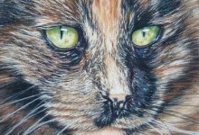 'My Cat Pebbles'