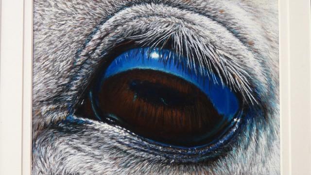 Close up of Arabian horses eye