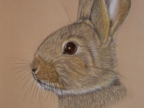 'Baby Bunny'
