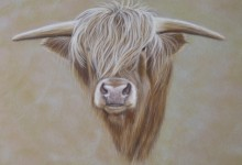 'Highland Cattle'  Beast Of The Moor