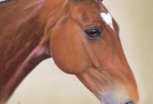 """""""Corazon"""" Polo Pony"""