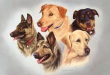 """ Five Dog Composition"""
